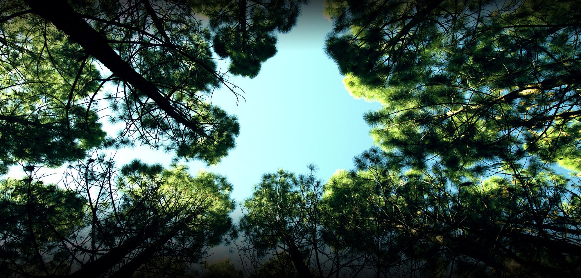 Camping les Araucarias