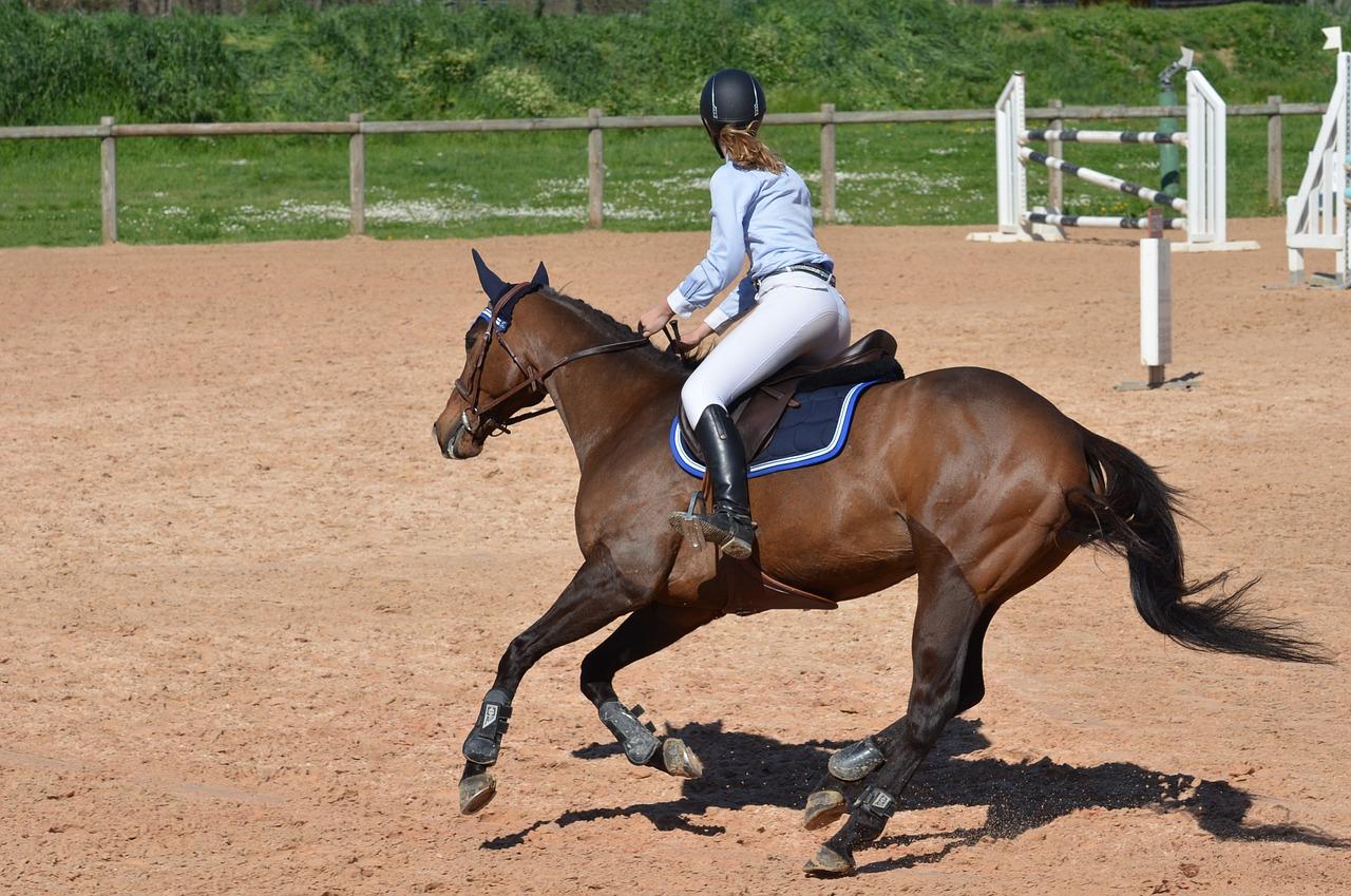 horse-806397_1280
